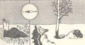 Определение сторон горизонта