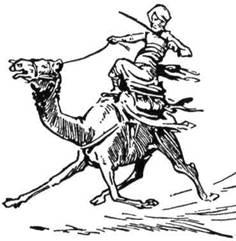 Сліди ніг верблюдів