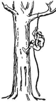 Спинання по деревах