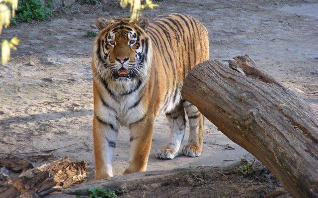 в Киевском зоопарке