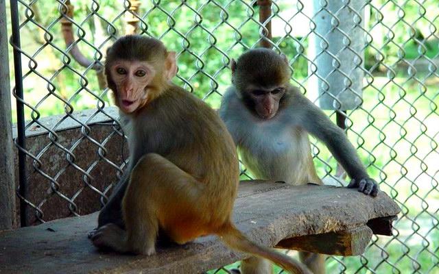 Адлерский обезьяний питомник