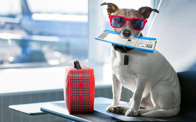 Путешествие на самолете с домашним животным