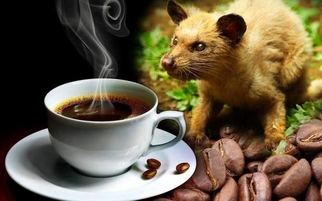 кофе Копи-Лувак