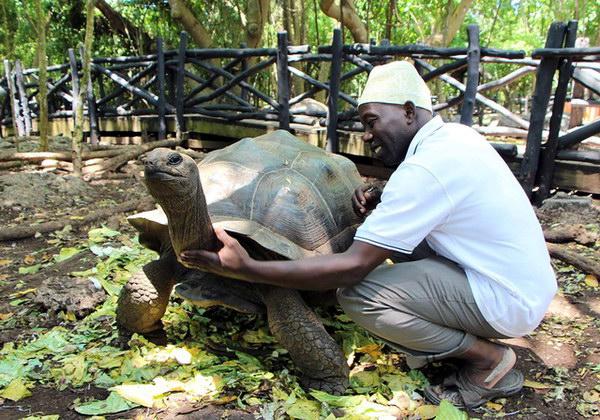 черепахи на острове-тюрьме Призон Айленд
