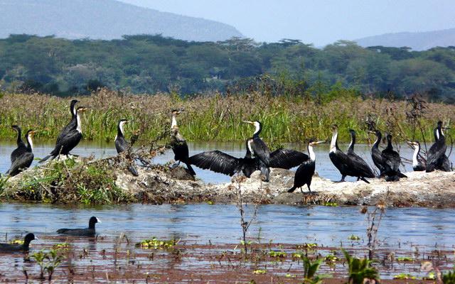 священное озеро народности масаев - Найваша