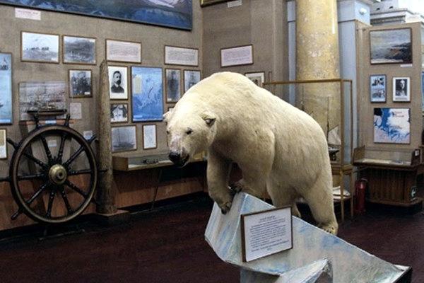 Среди экспонатов музея встречаются очень качественно выполненные чучела