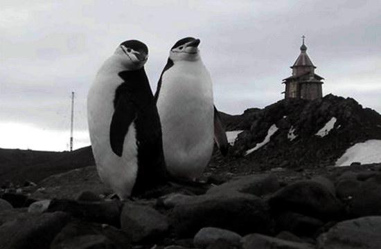Антарктические пингвины и православная церковь Святой Троицы
