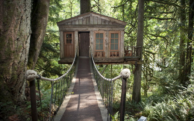отель на дереве