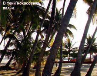 В тени кокосовых пальм