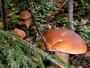 грибной туризм