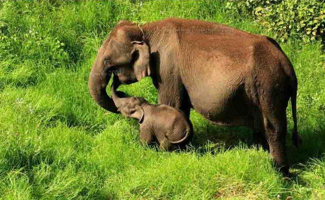 слоны в заповеднике Чиннар