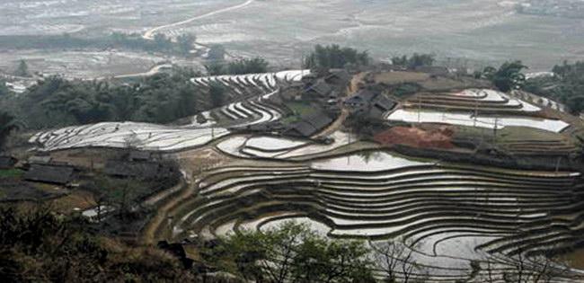 Рисовые поля в Шапе