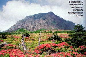 В апреле горы покрываются ковром изцветущей благоухающей азалии