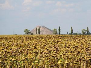террикон на территории Донецкой области