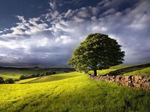 Особенности российской практики организации экологических и эколого-культурных туров