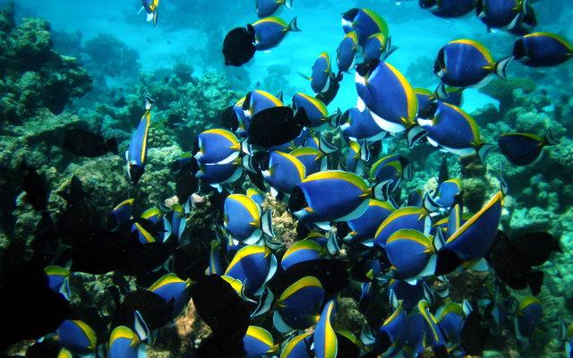 на Мальдивских островах богатый животный мир