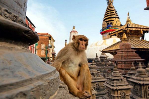Обезьяний храм в Катманду