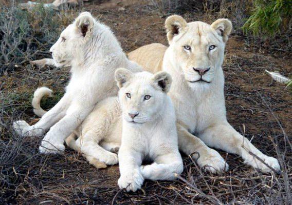 «отряд кошачьих»