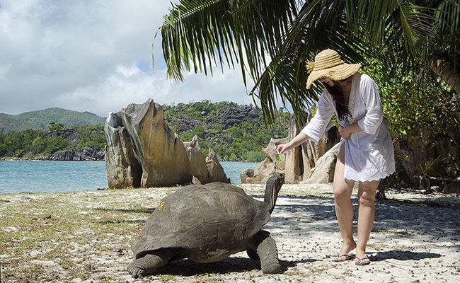 Животный мир на Сейшельских островах