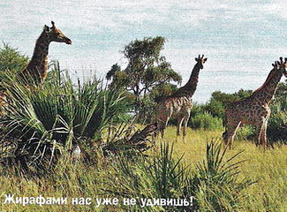 Жирафами нас уже не удивишь!