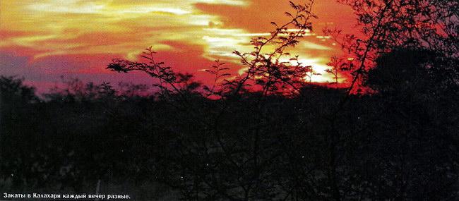 Закаты в Калахари каждый вечер разные