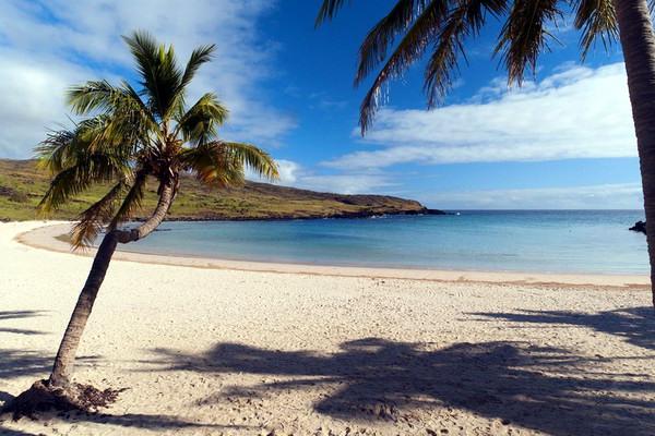 Одинокая пальма на берегу океана. Трудно представить, что когда-то здесь шумел тропический лес