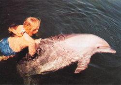 Забави у севастопольському дельфінарії