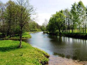 рекреаційне лісокористування в Чернігівській області