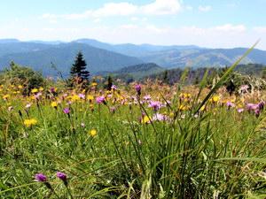 природні краєзнавчо-туристичні ресурси України