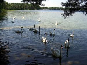 Шацький національний парк