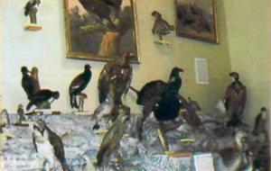 Фрагмент експозиції орнітологічної колекції