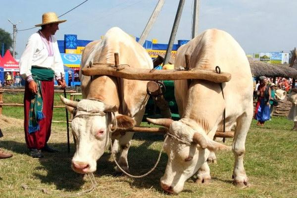 Етнографічний фестиваль Сорочинський ярмарок