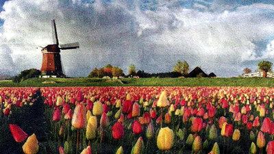Голландія: подорож у країну тюльпанів