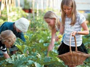 Агротуризм як форма диверсифікації діяльності аграрних формувань