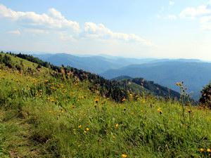 Карпатський регіон