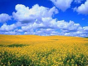 Економічна стратегія розвитку туристичної галузі в Україні